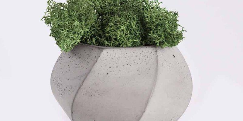 plant4-free-img.jpg
